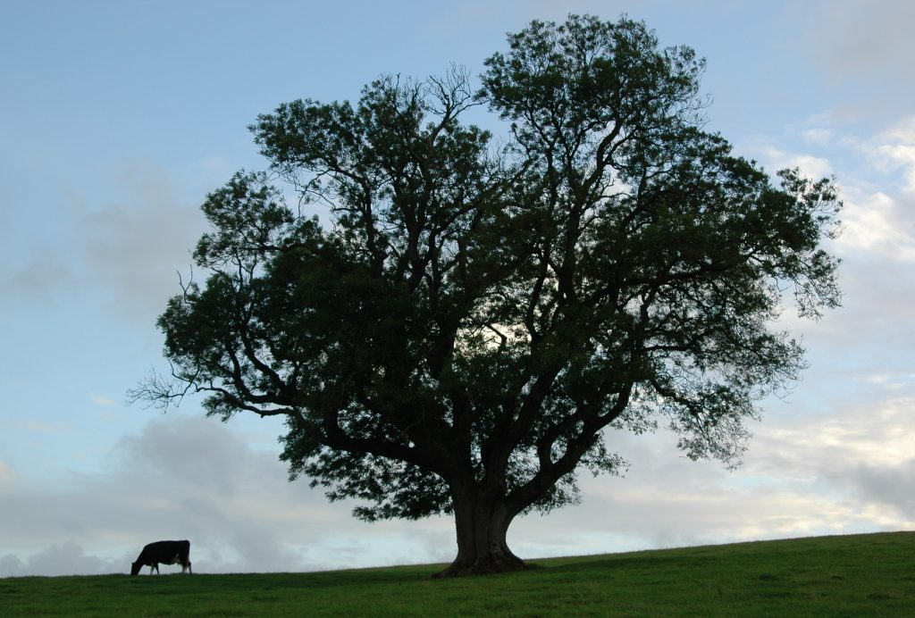 Protect A Local Tree Or Trees Faqs The Tree Council