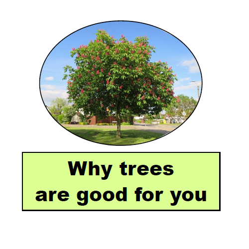 why trees are good for you