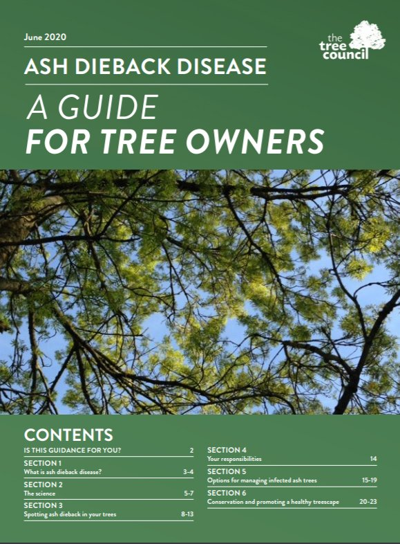 front page of ash dieback a guide for tree owners