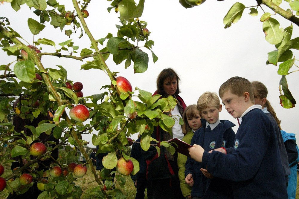 Orchards for schools